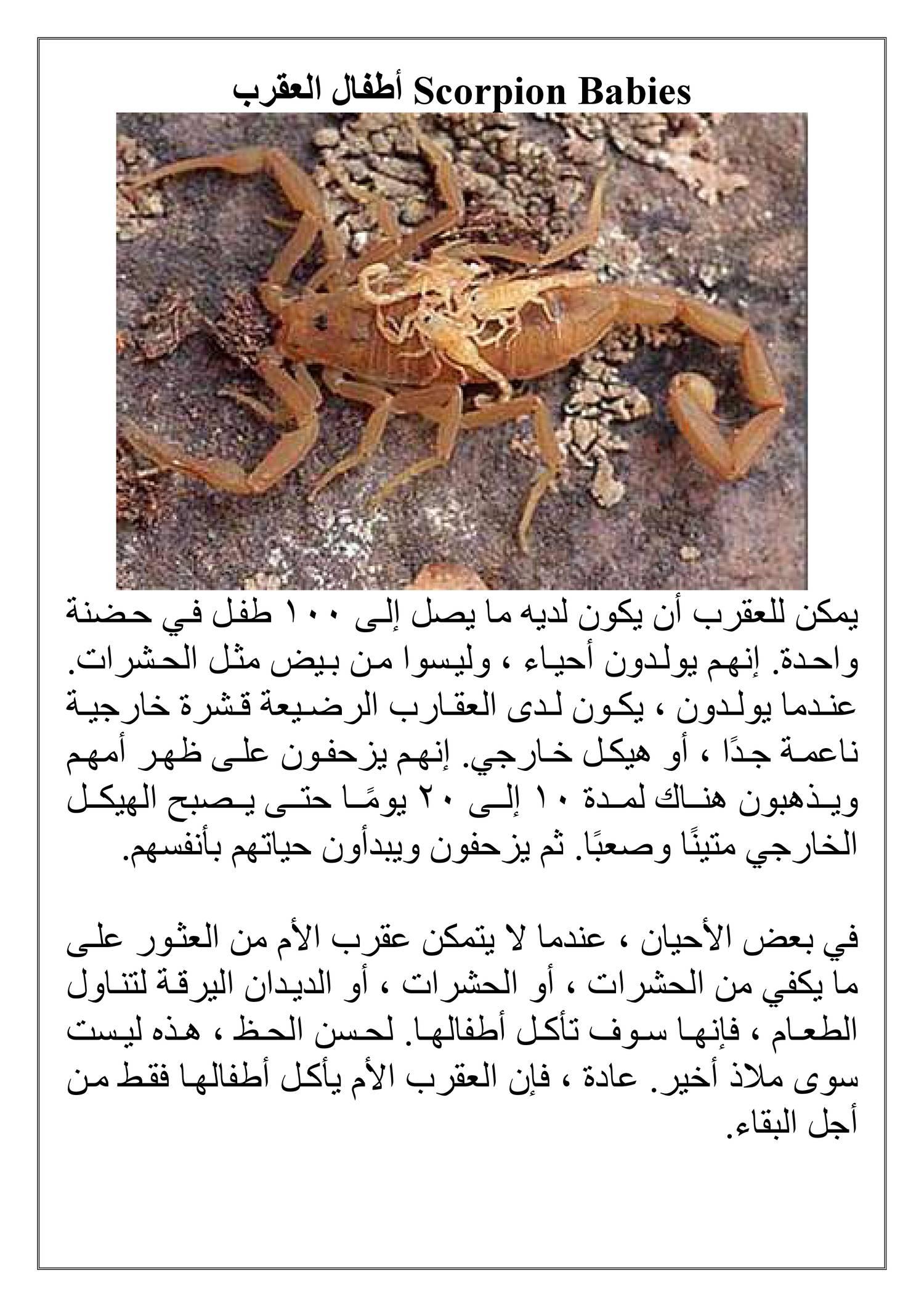 Scorpion Babies أطفال العقرب pdf | DocDroid