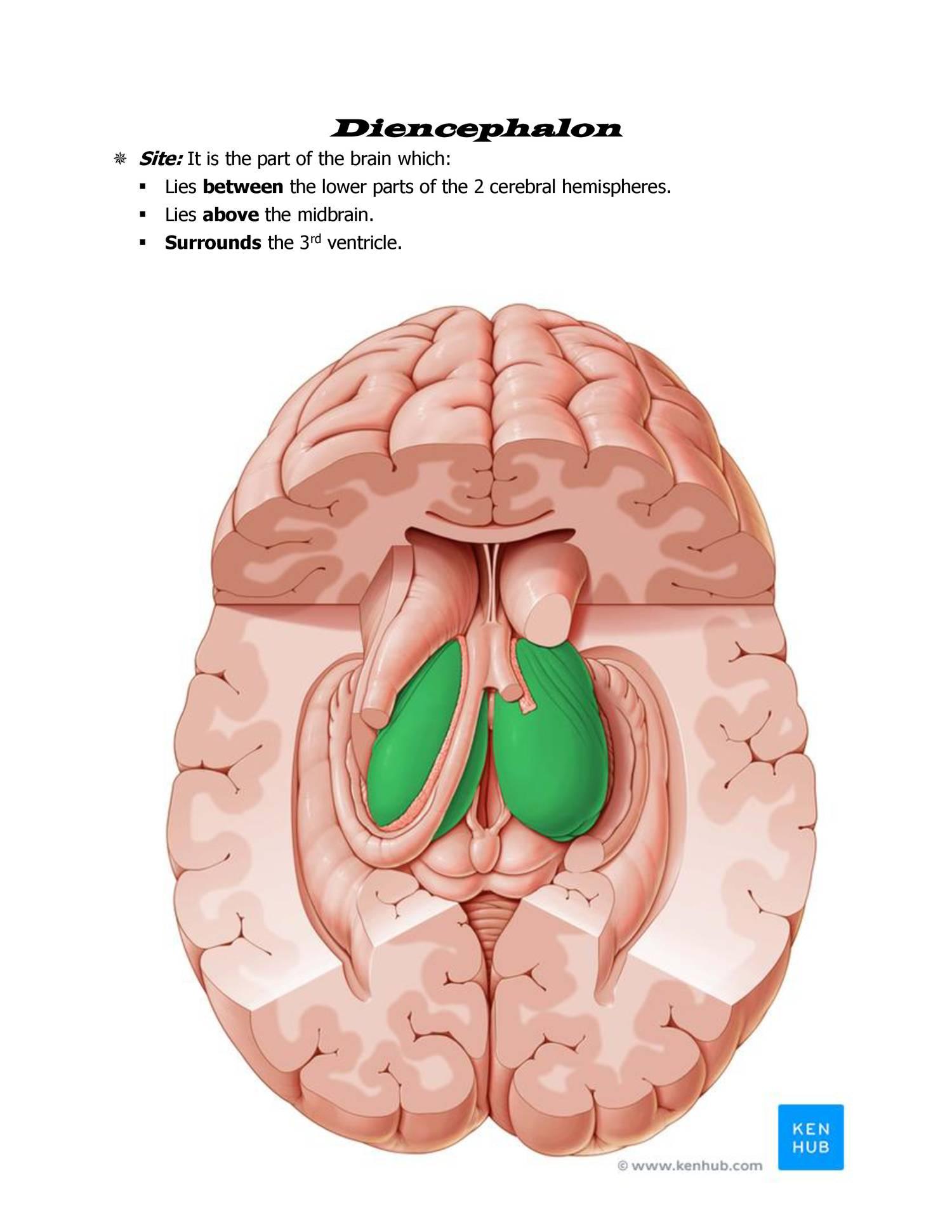 Anatomy diencephalon.docx - DocDroid