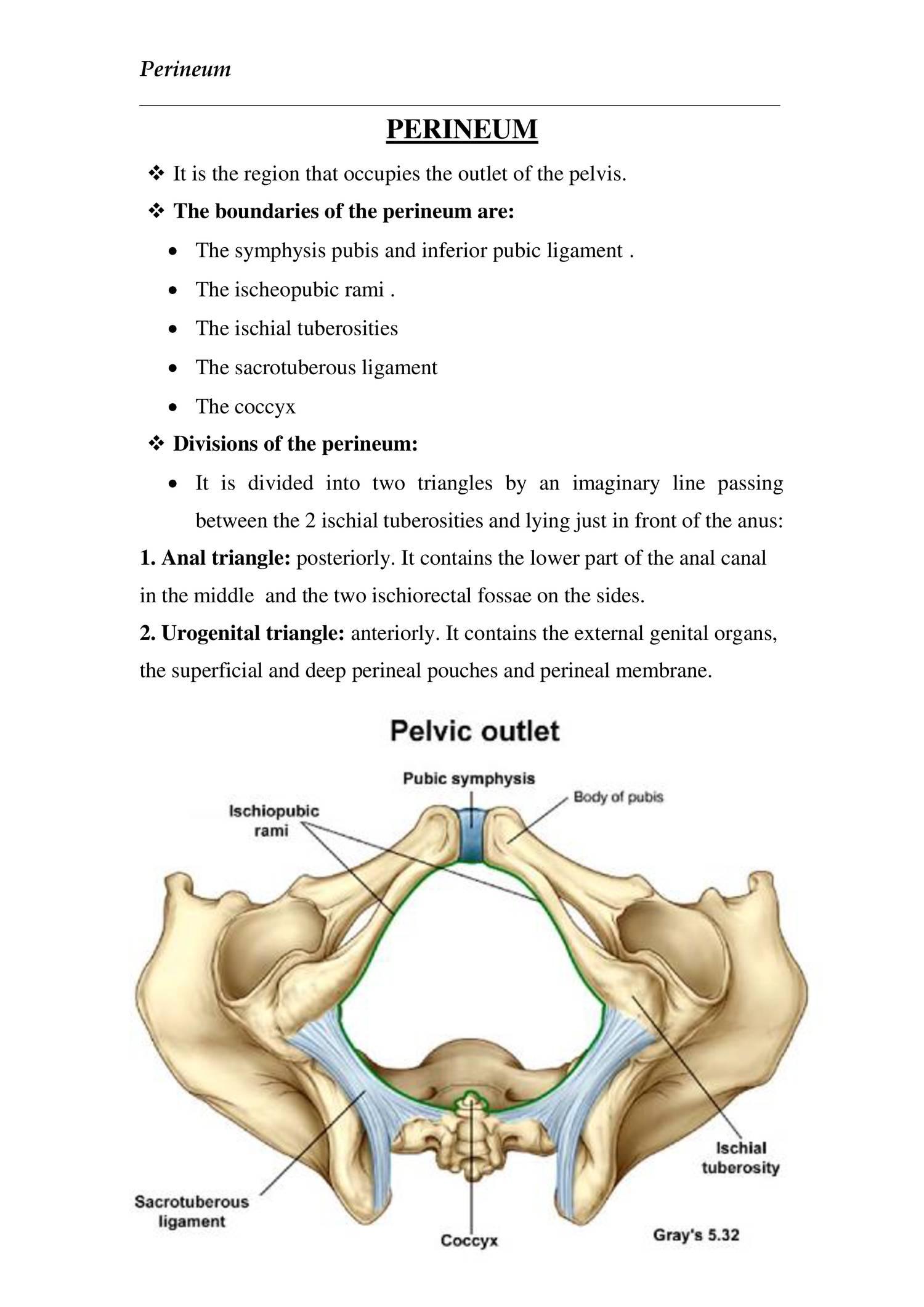 anatomy PERINEUM.doc | DocDroid