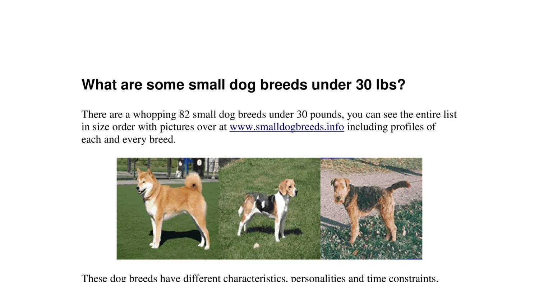 Dog Breeds Under  Lbs