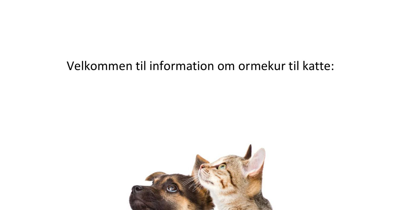 Ormekur til kat uden recept.pdf | DocDroid