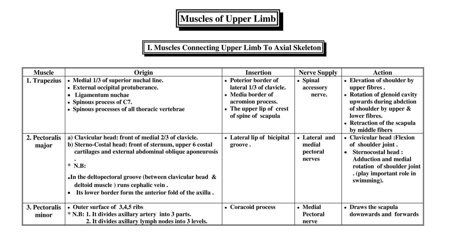 Anatomy Muscles Of Upper Limb 2018c Docdroid