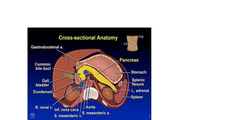 Anatomy Radiology Of Abdomenc Docdroid