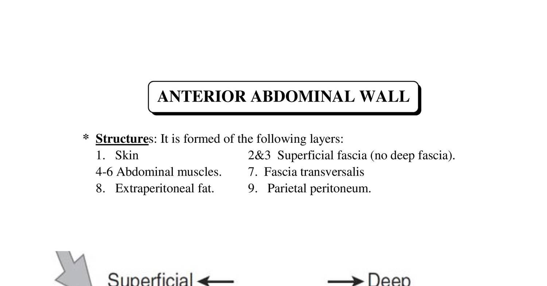 Anatomy ant. abdominal wall ( 2018 ).doc - DocDroid
