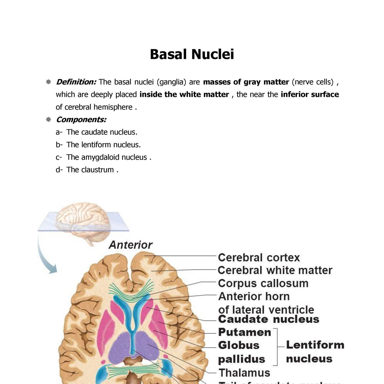 Anatomy Basal Ganglia.docx - DocDroid